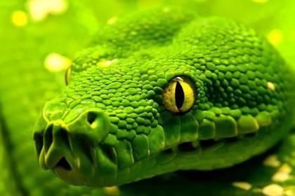 Green-snake-400x600